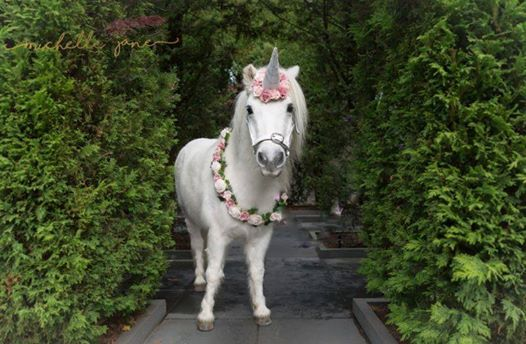 UnicornsPrincess & Princes 27 Aug 20th 1200-130