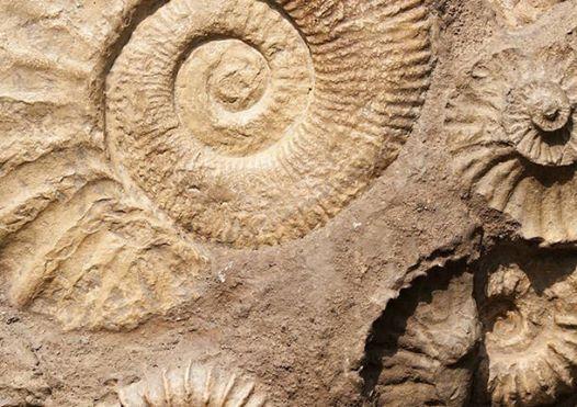 I marted con larcheologo - Fatti un fossile