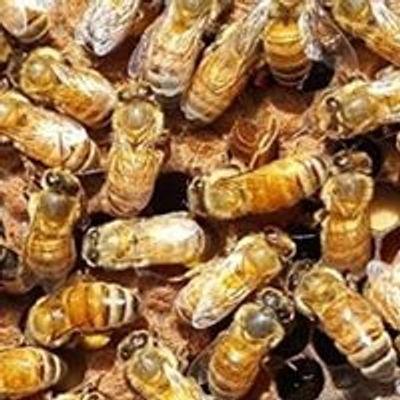 Kissimmee Valley Beekeepers Association