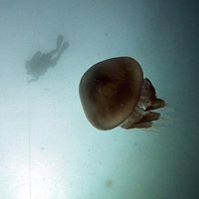 Dive Newquay