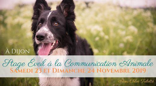 STAGE veil  la Communication Animale  Dijon