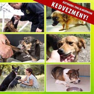 Rehabilitcis kutyakikpz tanfolyam