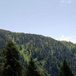 MHRs HillTrail Run Trails of Galliyat Mountains Run