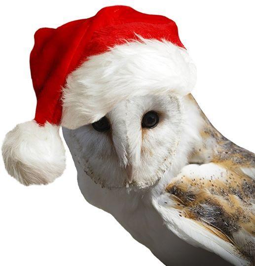 Christmas tea with Owls