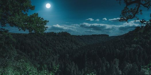 Virtual Tour of Germany's Black Forest, 2 October   Online Event   AllEvents.in