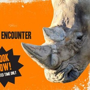 Behind-the-Scenes Encounter  Southern White Rhinoceros