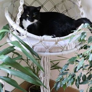 MACRAME CAT HAMMOCK WORKSHOP