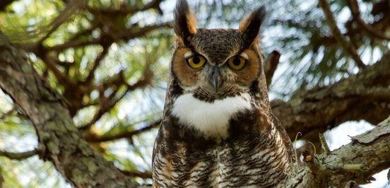Owl Explorations, 11 September | Online Event | AllEvents.in