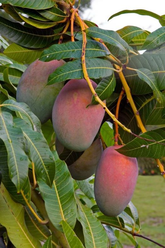 Growing Great Fruit Trees