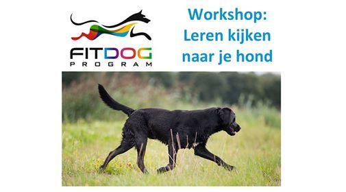 Workshop - Leren kijken naar je hond