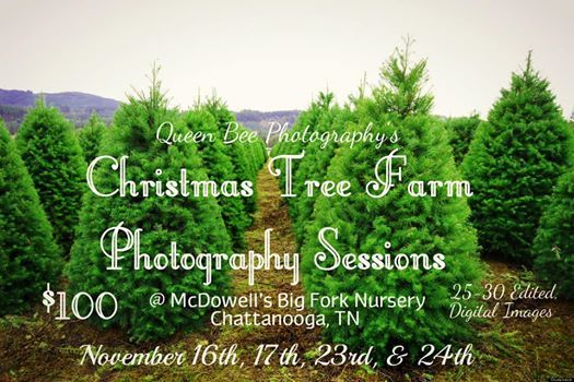 Christmas Tree Farm Photography Sessions At Mcdowell S Big