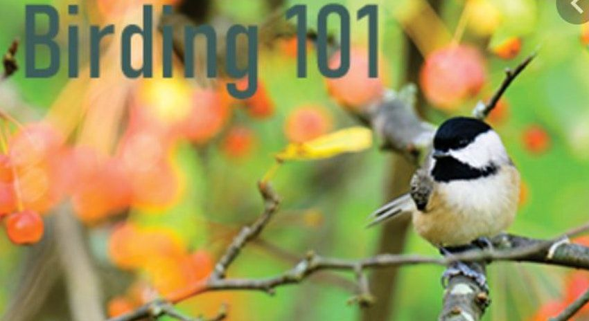 Birding 101 Virtual Workshop | Event in Philadelphia | AllEvents.in