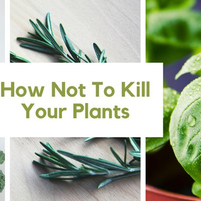 How Not To Kll Your Plants