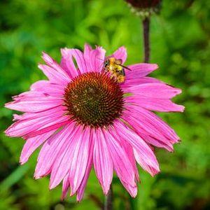 Guided Native Pollinator Plant Walking Workshop