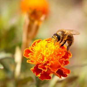 Bee Day at the Garden