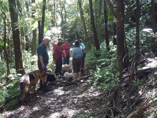August Wairarapa Dog Walk in the Tararua Forest Park area at