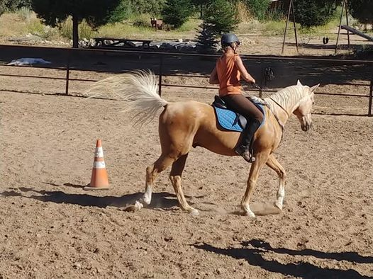Introduction to Bridleless Riding- for the every day rider