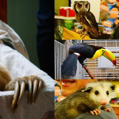 Virtual Animal Meet & Greet with the Staten Island Zoo