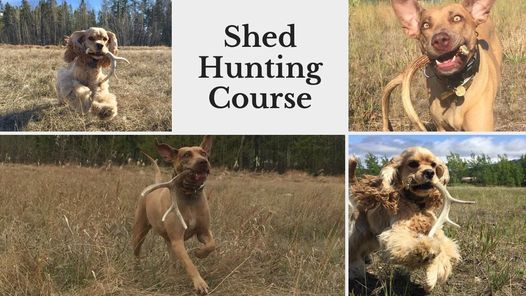 Shed Antler Hunting, 3 August | Event in Whitehorse | AllEvents.in