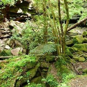 Selbstheilung Aufstellungen und Ausrichtung in der Natur