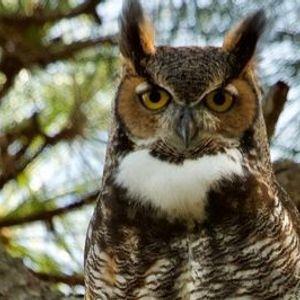 Owl Explorations