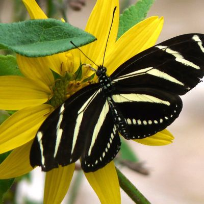 Cool Plants to Attract Butterflies and Pollinators (webinar)