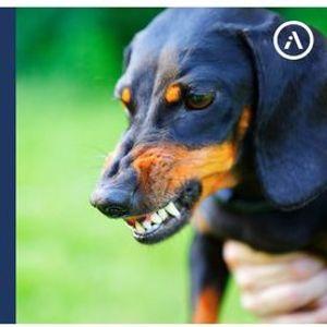 Agressividade canina e preveno