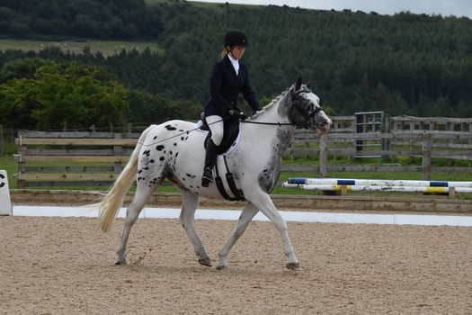 Dressage Competition, 6 June | Event in Durham | AllEvents.in