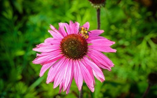 Guided Native Pollinator Plant Walking Workshop, 22 May | Event in San Antonio | AllEvents.in