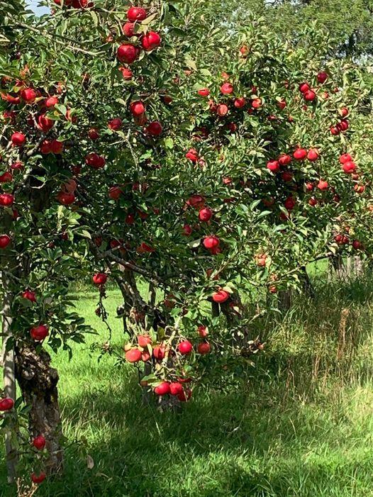 Apple Day @The Apple Farm, The Apple Farm Snitterfield ...