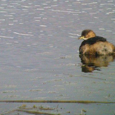Birdwatching Class Rodley Nature Reserve