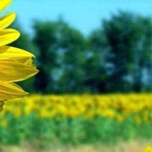Summer SOULstice Healing Day