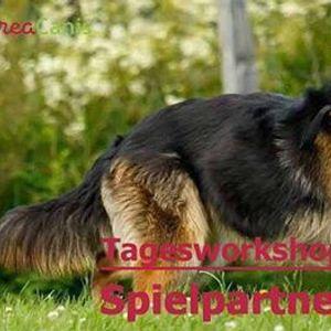 Spielpartner Hund Vanessa Brugger D-Wolfsburg