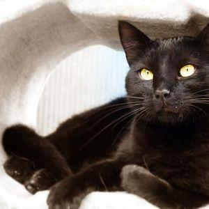 Umgang mit der scheuen Katze