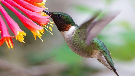 Planting for Birds Eco-Restoration Day
