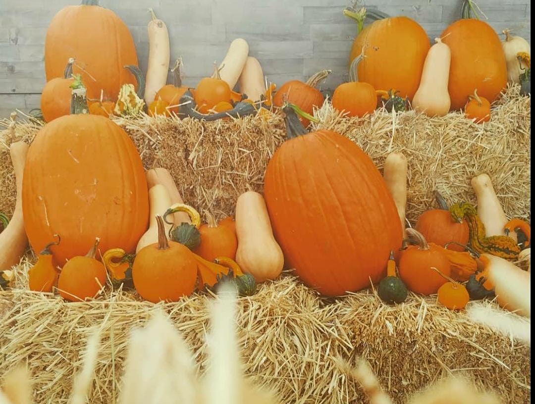 Pumpkin Decorating Workshop | Event in Washington | AllEvents.in