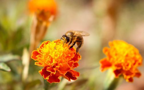 Bee Day at the Garden, 22 May | Event in San Antonio | AllEvents.in