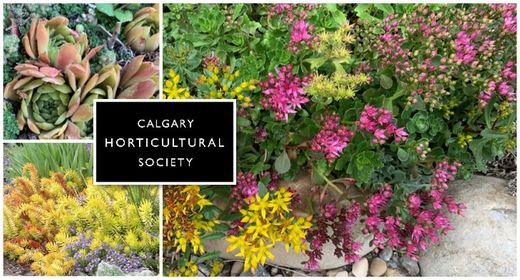 Using Succulents in the Garden—Online, 31 May | Event in Calgary | AllEvents.in