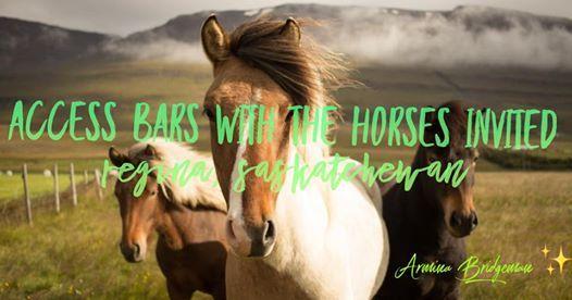 Access Bars Class with the Horses Invited Regina Saskatchewan