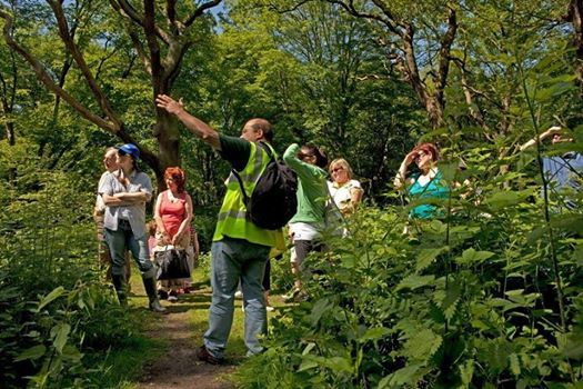 Guided walks at Bisham Woods