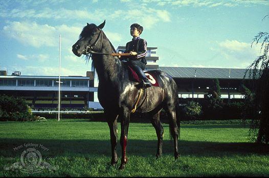 The Black Stallion (Family Film Series)