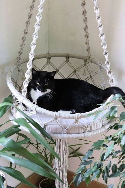 MACRAME CAT HAMMOCK WORKSHOP, 24 April | Event in Diepkloof | AllEvents.in