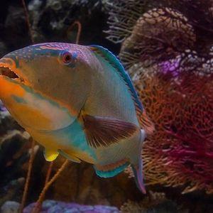 Aquarium Adventures at Home Animals After Dark