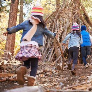 Waldfchse II - Der Natur auf der Spur