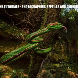 DCP Online Masterclass - Photographing Reptiles and Amphibians
