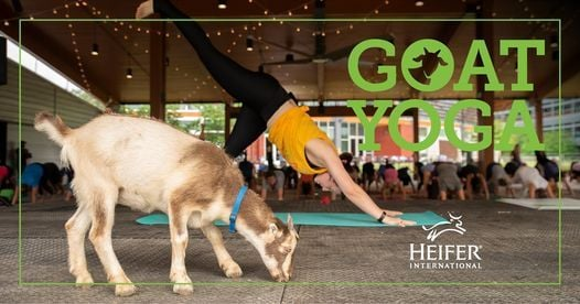 Goat Yoga, 9 October   Event in Little Rock   AllEvents.in