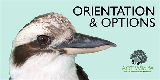 Orientation - ACT Wildlife