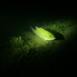 Night Diving Course