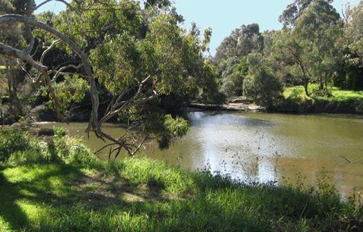Foreshore Walks - Parramatta River