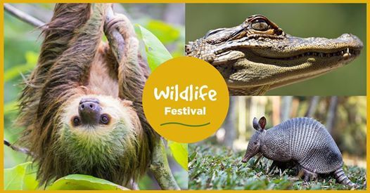 Albany- Meet a Sloth Alligator Porcupine Python & tons more